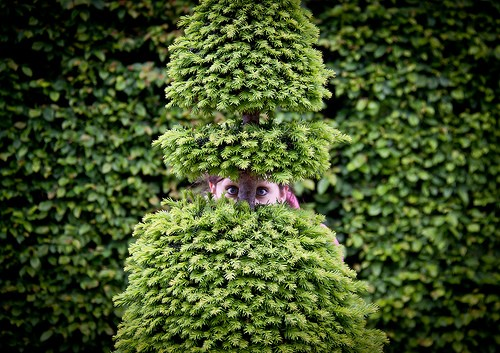 Melissa liked to live life on the hedge.