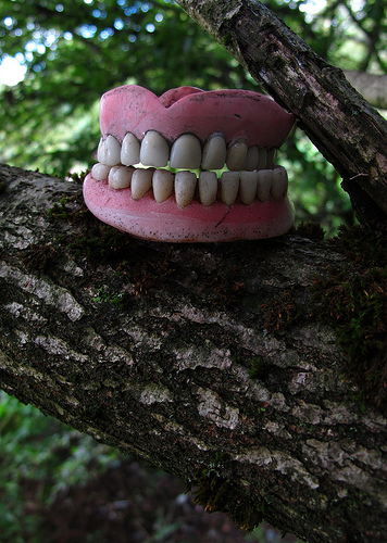 Dentistree.