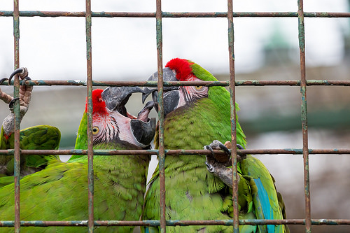 I would never keep a parrot in a cage. Its against macaw values.