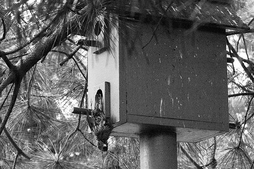 Its a very old nest box ....... the tits are starting to sag