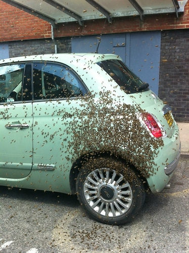 """Ive just taken off the petrol cap. Im trying to run it on bee-pee""."