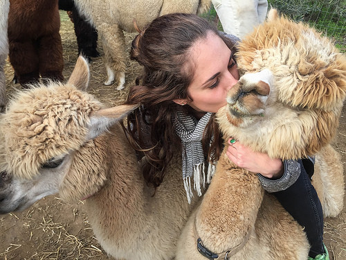 Alpacalips Now