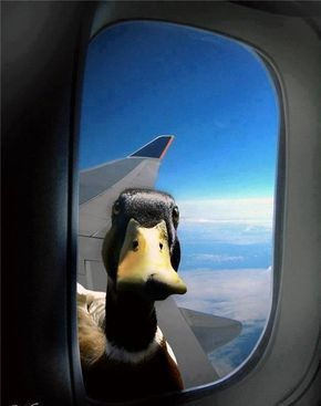 """ I told you before we got on the plane, to just give him the fuckin bread."""