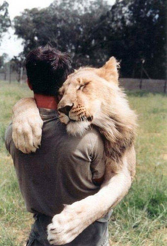 The Lion Cling.
