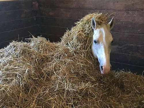 ♫ A neigh in the manger ...
