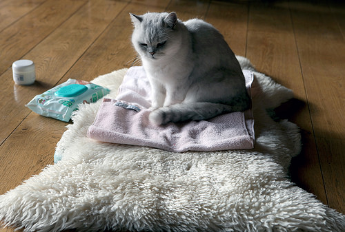 The towel and the pussycat
