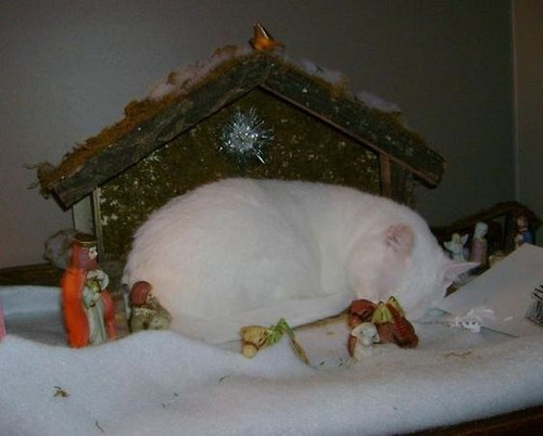 ♪ A stray in a manger ♪