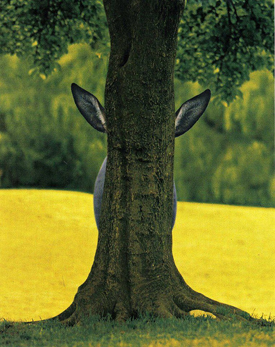Donkey Oak-tree