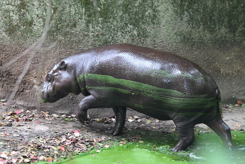 The smear on the hippopotamus is equal to the smears on the other two sides.
