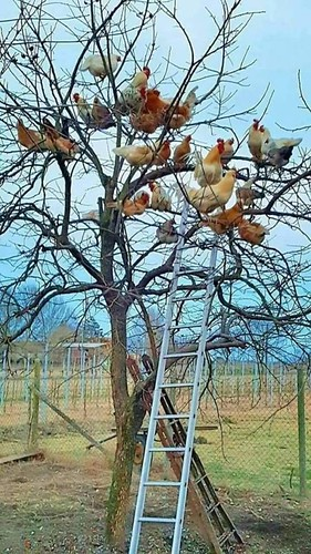 """It was easier than building a coop,"" said Dave. ""But catching the eggs is a bugger."""