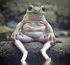 The frog version of Basic Instinct was a little weird.