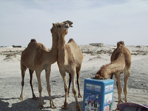 Mum, Dad bet you cant see me now as Im camelflaged