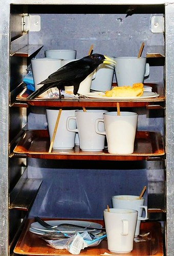 Cafe closed due to Corvid outbreak