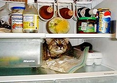 Donna you were drunk last night. No I wasn't. OK explain why the oven ready chicken is outside the back door and the cat is in the fridge?